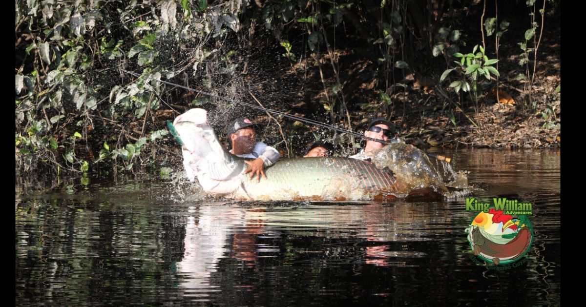 An image of ossiah at King Williams adventure and an arapaima off their facebook